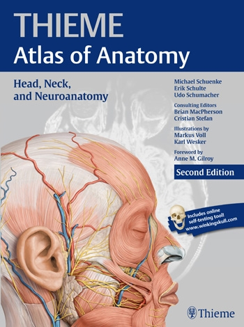 Anatomy Head Neck And Neuroanatomy Thieme Atlas Of Anatomy