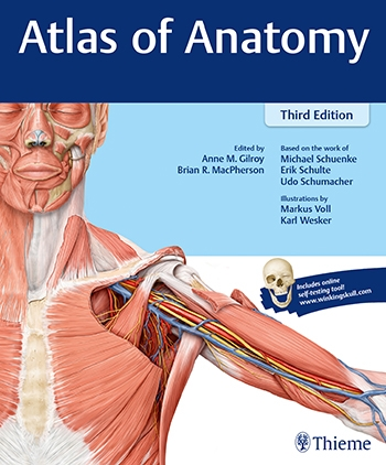 Anatomy Atlas Of Anatomy